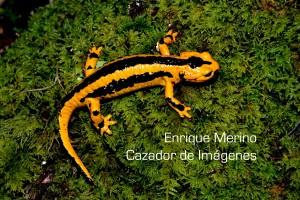 01mayo_Lantueno_1-TEMA1-Mycota