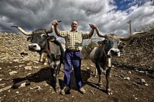 Rafa, ganadero de Requejo, con dos de sus tudancas. Campoo Devanado. Hespir.