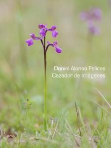 ESBELTA-TEMA-2-Orquideas-y-Blanquillas-JAPY
