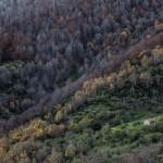 Cabaña de Gulatrapa en el Alto Híjar. Campoo devanado. Maner.