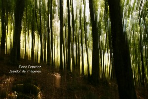 Luces-y-sombras---TEMA-4---Forestal