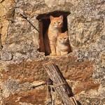 Gatos en Villamoñico