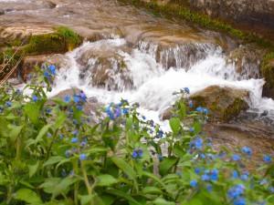 Rio Besaya a su paso por Lantueno