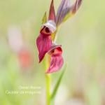 SERAPIA---TEMA-2-Orquideas-y-Blanquillas-JAPY
