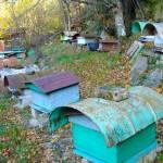 aldea apicultura pag 97 (2)