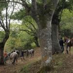 caballos hoyos 2009 pueblo (8)