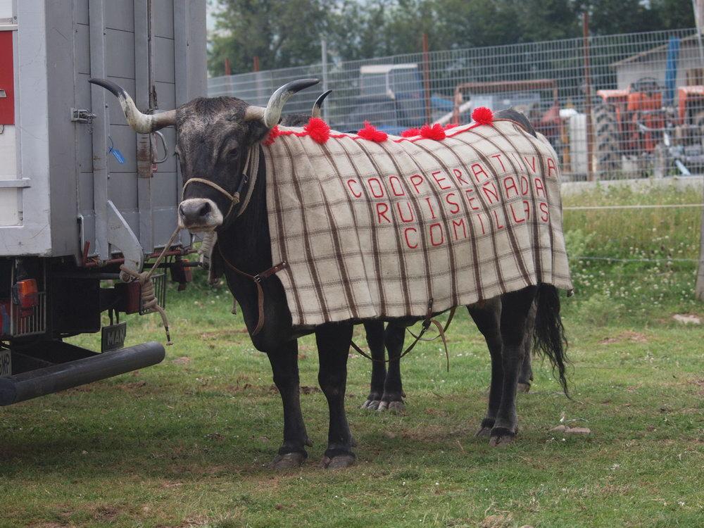 caballos requejo 2010 (3)