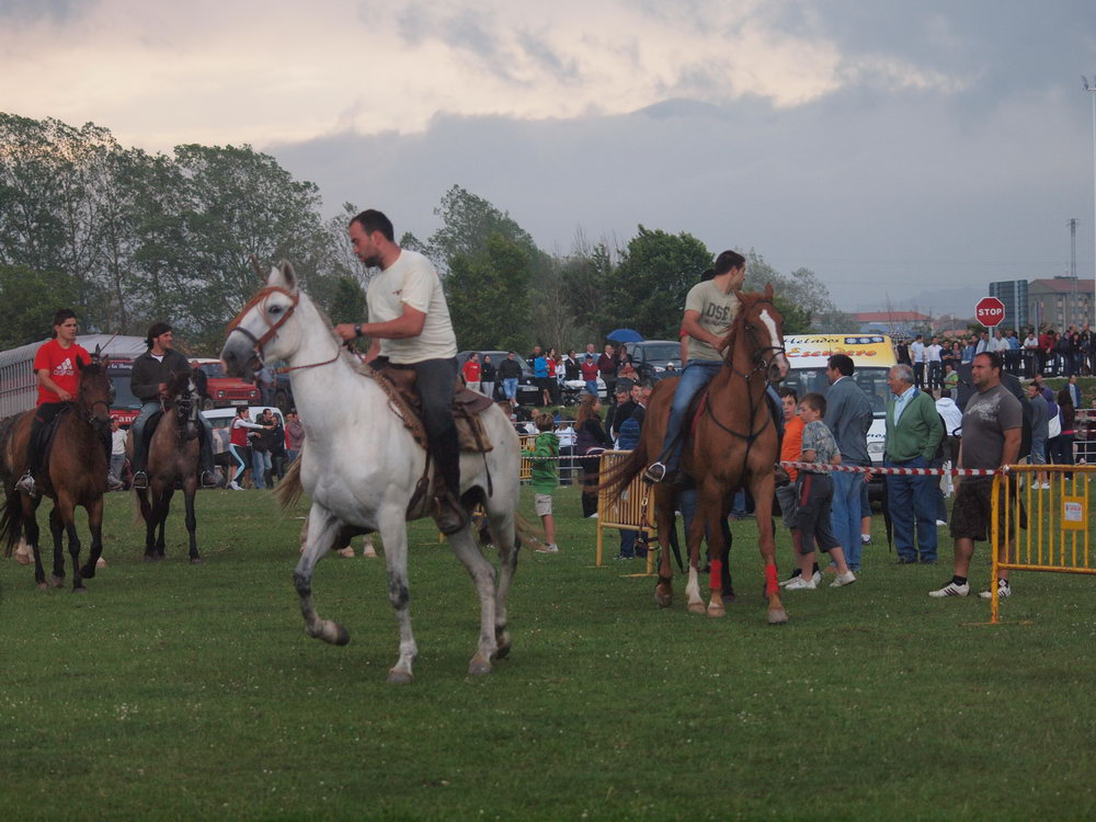 caballos requejo 2010 (41)
