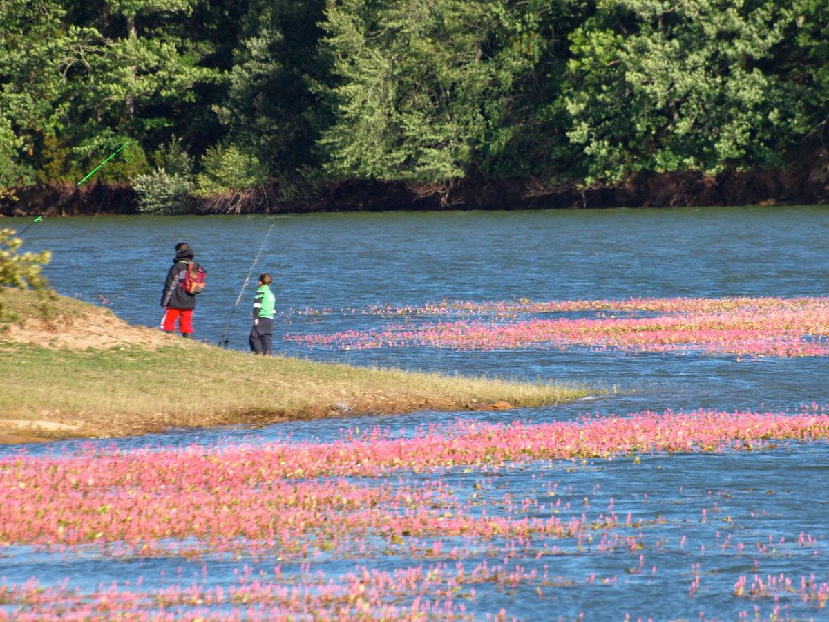 Pescadores en el embalse del Ebro.