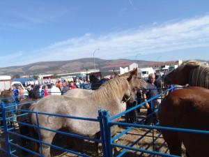 Feria de Ganado de San Mateo