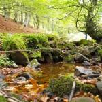 Entorno natural cercano a Lanchares