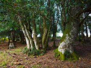 Entorno natural de Lanchares