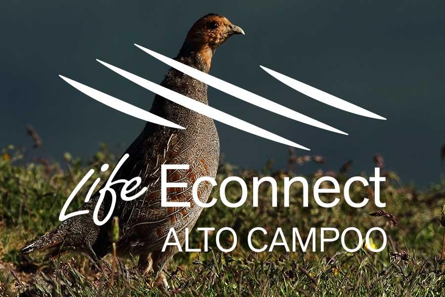Life Econnect Alto Campoo