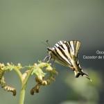 mariposa-sobre-helecho---tema-1---mosquito