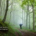 paseo-en-el-hayedo_tema-4_chavaluco_25-05-2014alto-del-bardal